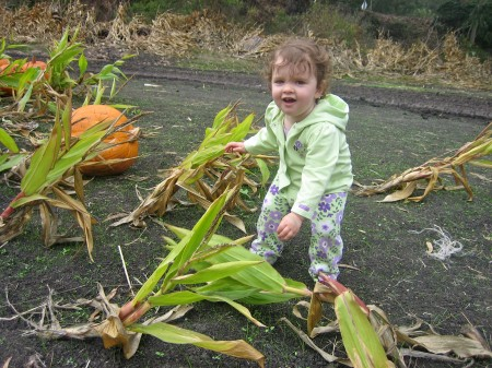 Izzy and the corn