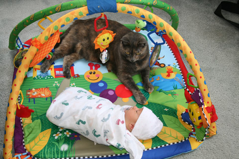 Izzy and Murky share the play mat.